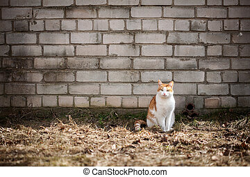 Cat by the wall