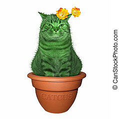 Cat cactus in a pot 2