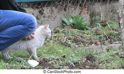 cat care - woman hand strokes white cat