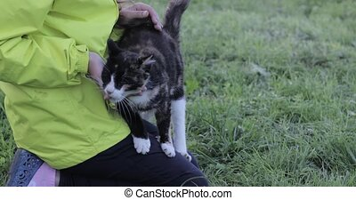 Cat caresses with the girl