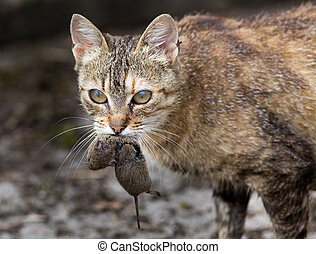 Cat carrying mouse in mouth