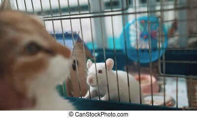 cat catches a white pet rat mouse in a cage. slow motion...
