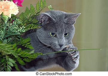 cat catching flower - Russian blue cat