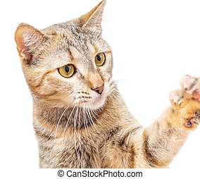 Cat catching or asking something with paw.