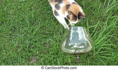 cat caught with claws fish in glass aquarium in green grass....