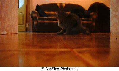 cat chasing laser pointer towards camera. Slowmo.
