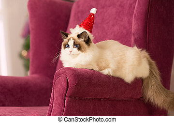 Cat. Christmas party, winter holidays cat with gift box. New year cat. christmas tree in interior background.