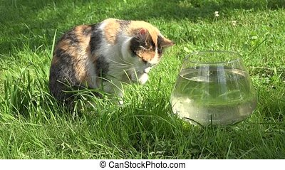 Cat clean wash wet claws paws sitting near glass aquarium...