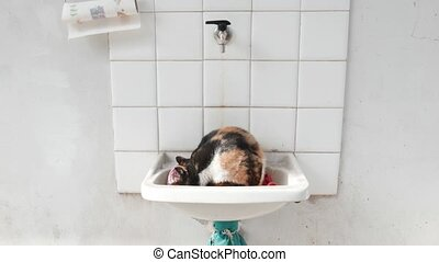 odd cat cleaning itself in a washbasin
