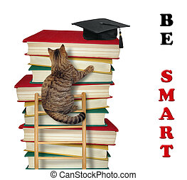 Cat climbs the ladder of knowledge 2