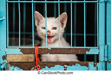 Cat closed in a blue cage on chinese market