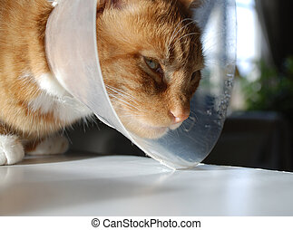 Sick Cat with protective collar