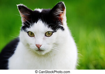 cat curiously looking forward against green background