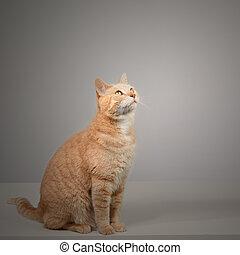 Cat - Cute orange domestic cat portrait. Animal health...