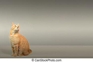 Cat - Cute orange domestic cat portrait. Animal health ...