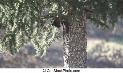 Cat descending from tree - Long shot of cat descending from...