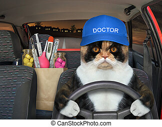 Cat doctor carries medicines in his car