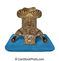 The beige cat athlete is doing yoga headstand exercise on a blue fitness mat. White background. Isolated.
