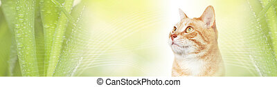 Cat - Domestic ginger pet cat over abstract green background