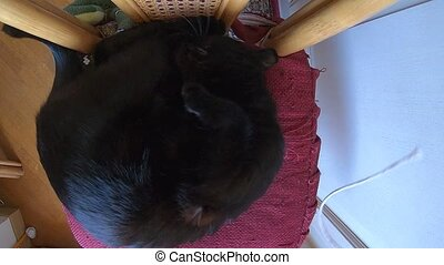 cat drawing attention - SLOW MOTION: drawing attention a...