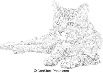 Cat drawing, line art