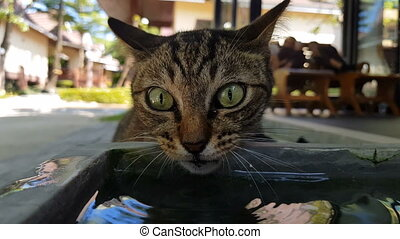 Cat drinking water from the pot - Closeup of beautiful cat...