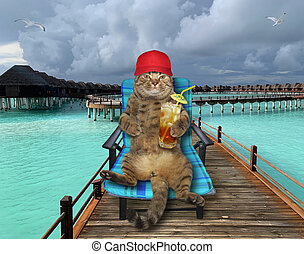 Cat drinks cocktail on wooden pier 2