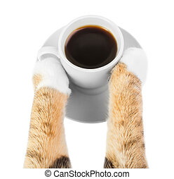 cat drinks coffee, cat paws holding a Cup of coffee