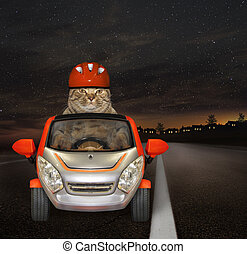 Cat drives down the highway at night