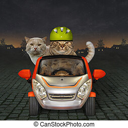 The cat in a green helmet drives his friend by car at night.