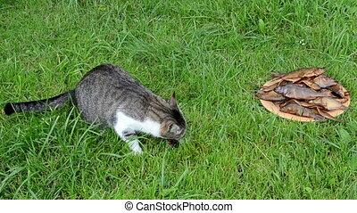 cat eat fish run away - cat eat stolen freshly smoked fish...