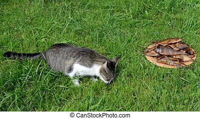 cat eat smoked fish