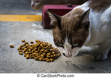 Cat eating animal food