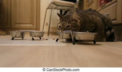 Cat eating at home