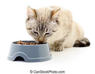 Cat eating dry food.