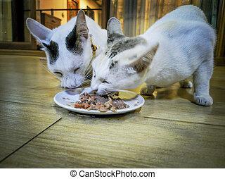 Cat eating food,1