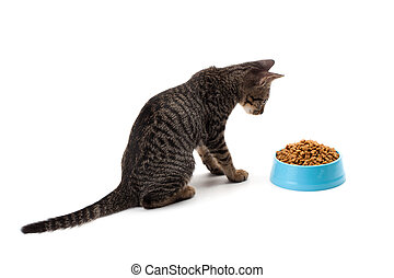 cat eating pet dried food