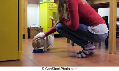 Cat eating pet food with owner