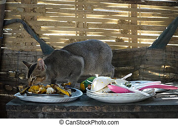 Cat Eating Scraps of Food on Table