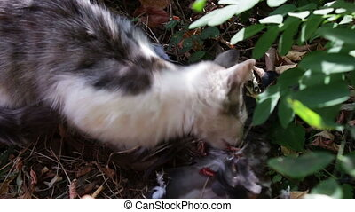 Cat eats a pigeon in the grass.