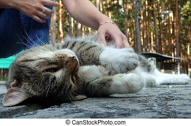 Cat enjoyd of human caress