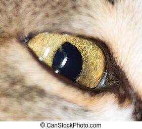 cat eyes. close