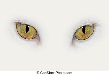 closeup on eyes of a white cat