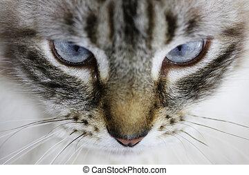 Cat eyes closeup