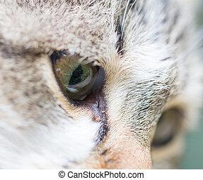 cat eyes. macro