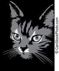 grey cat dace in the dark night
