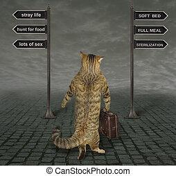 Cat facing a choice