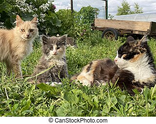 cat family lying in the grass