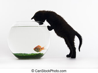 Cat & Fish - Cat - the small furry animal with four legs and...