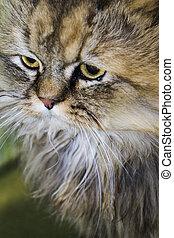 Cat, fluffy cat, mysterious cat